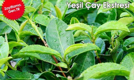 Yeşil Çay Ekstresi