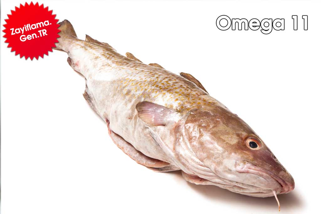 Omega 11