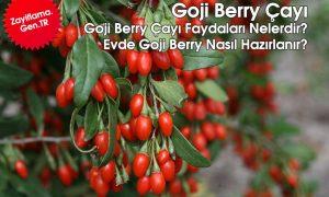 Goji Berry Çayı Faydaları Nelerdir? Nasıl Hazırlanır? Bitkisel Çay Tarifi